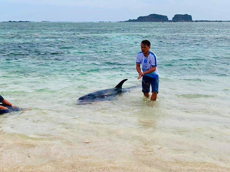 Dân tổ chức hò bá trạo để cá bà chuông về biển mà bất thành - ảnh 4
