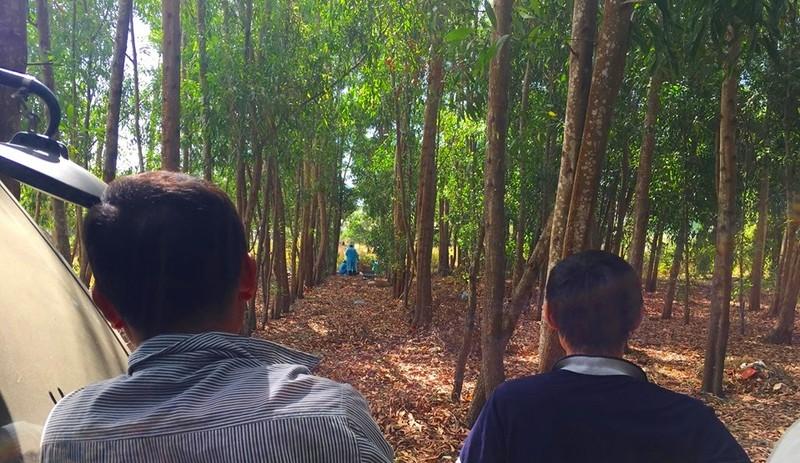 Phát hiện thi thể nữ giới phân hủy trong rừng keo - ảnh 1