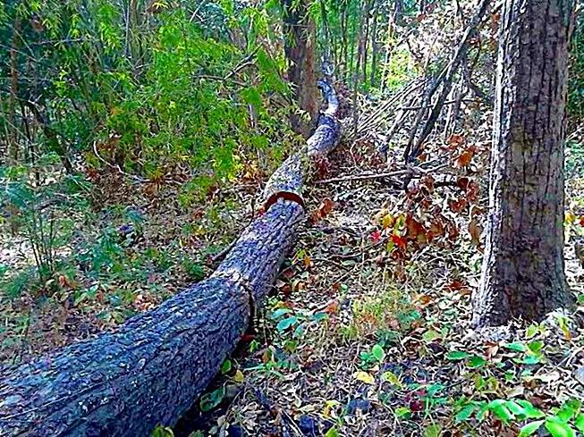 Lập chuyên án điều tra vụ rừng Tà Kóu bị đầu độc bằng hóa chất - ảnh 1