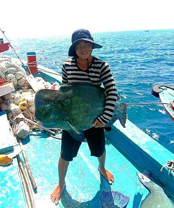 Tìm ra con tàu đánh cá đầu gù quý hiếm đưa lên Facebook - ảnh 1