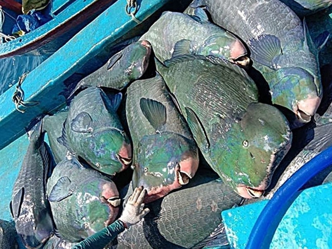 Tìm ra con tàu đánh cá đầu gù quý hiếm đưa lên Facebook - ảnh 2