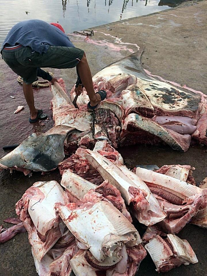 Người dân từ chối mua cá đuối khủng gần 800 kg do tâm linh - ảnh 3