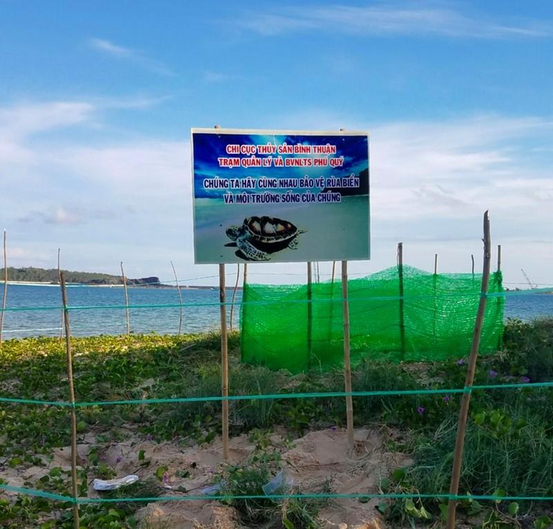 Bảo vệ nghiêm ngặt đưa 45 chú rùa tí hon về đại dương - ảnh 4