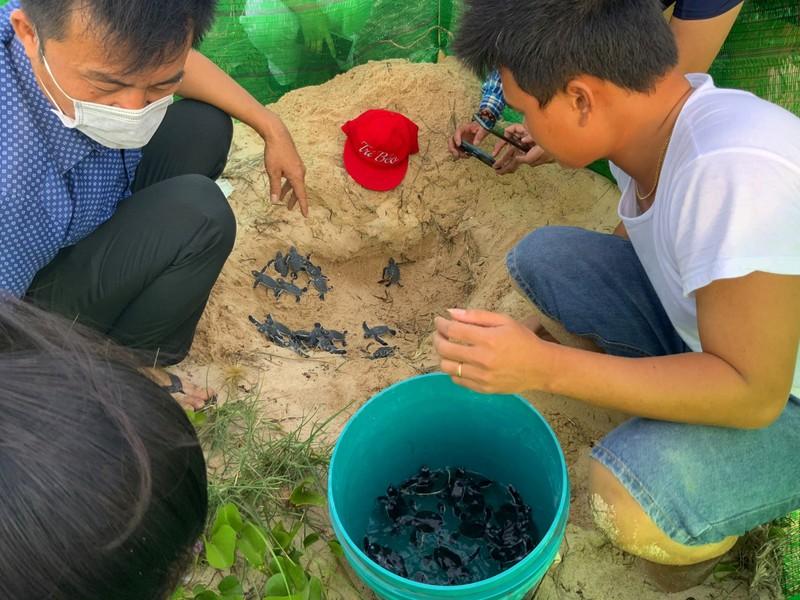 Bảo vệ nghiêm ngặt đưa 45 chú rùa tí hon về đại dương - ảnh 5