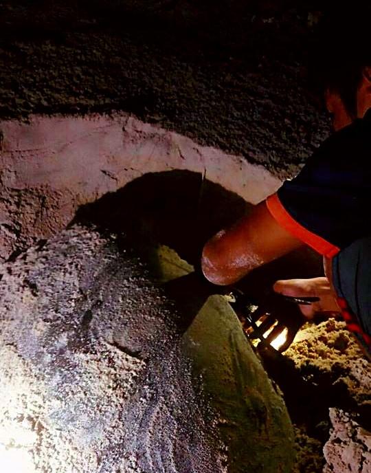 Đỡ đẻ thành công rùa biển nặng 80kg về Hòn Cau sinh sản - ảnh 3