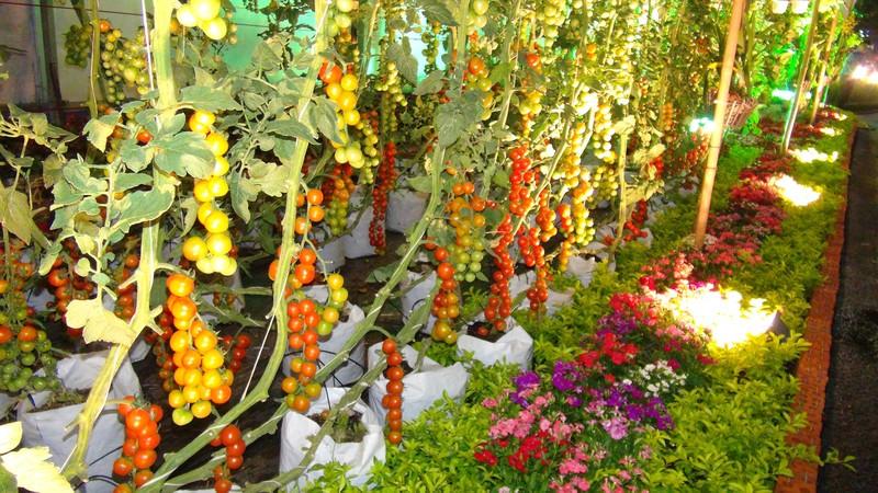 Ngắm đường hoa Hàm Nghi trước giờ khai mạc - ảnh 15