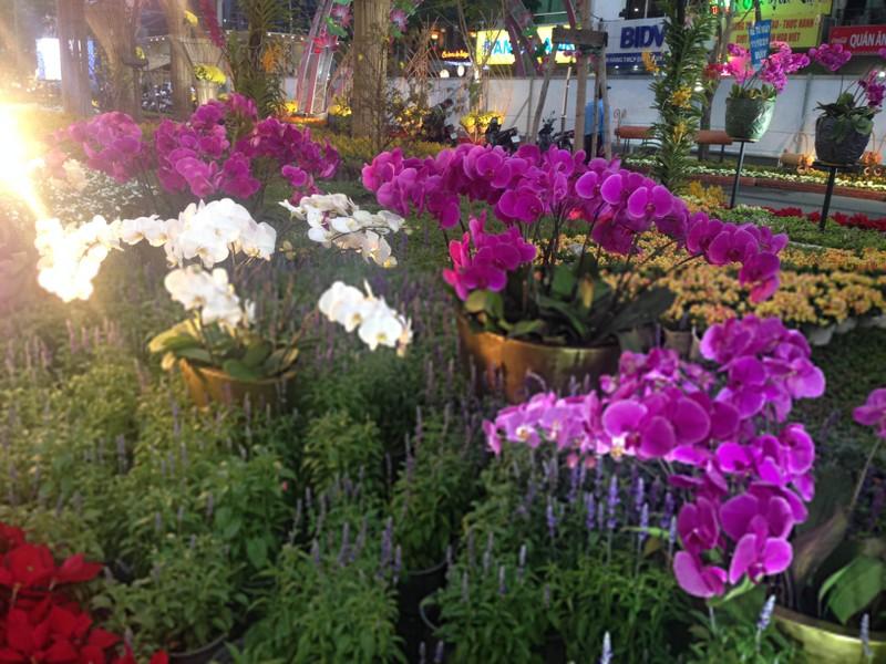 Ngắm đường hoa Hàm Nghi trước giờ khai mạc - ảnh 19