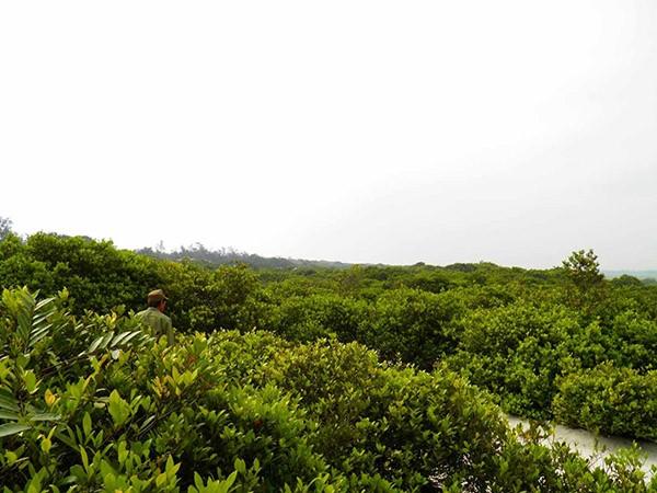 Khu rừng trâm bầu cổ che làng khỏi cát bay  - ảnh 22