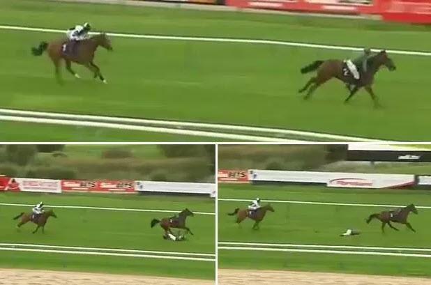 Hi hữu: Nữ VĐV ngã ngựa trên đường đua vì… ngựa - ảnh 1