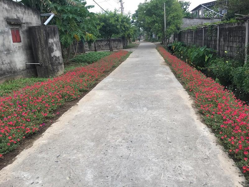 Làng hoa mười giờ đẹp bình dị bên dòng Nhật Lệ - ảnh 9