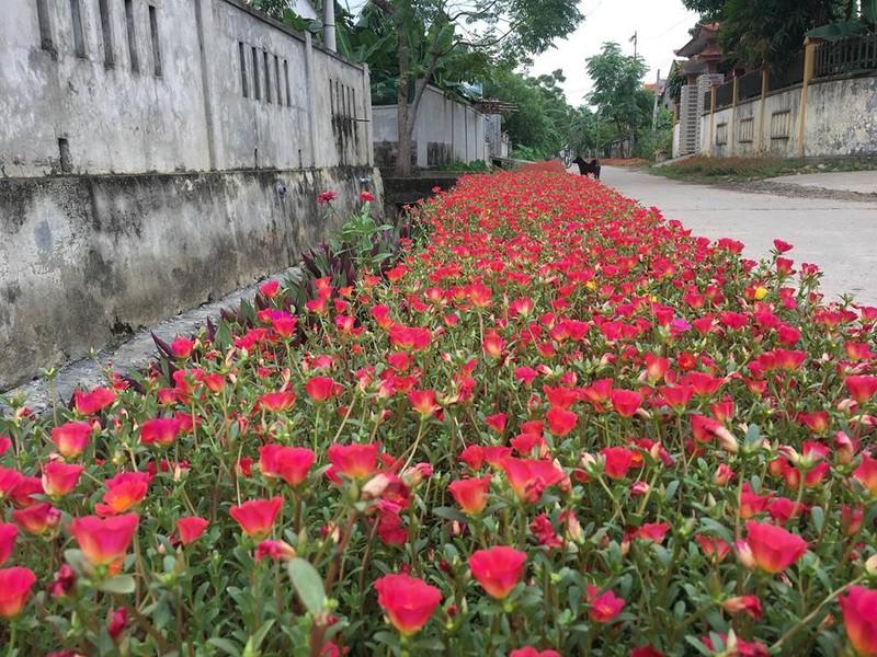 Làng hoa mười giờ đẹp bình dị bên dòng Nhật Lệ - ảnh 6