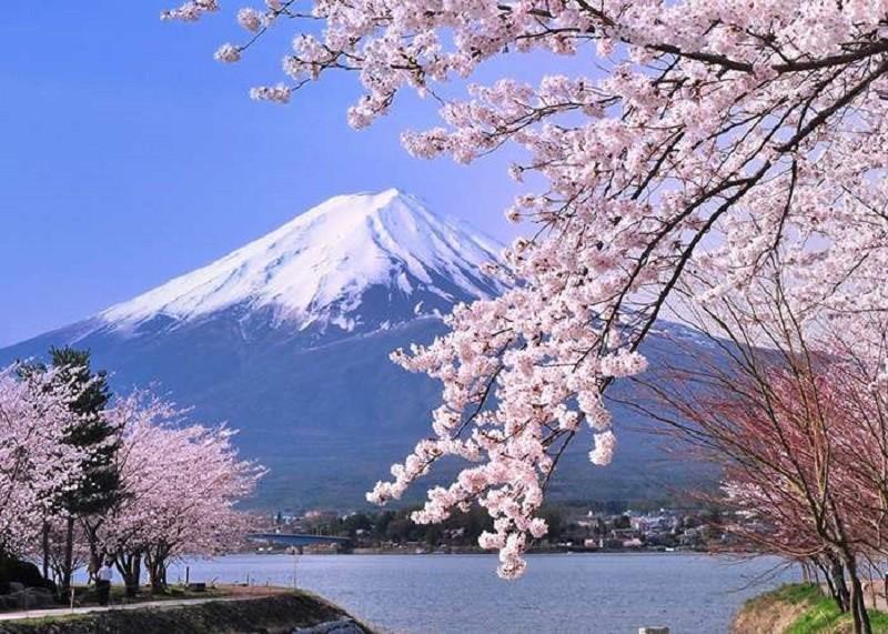 Đến Nhật thấy hoa đẹp chớ vội sà vào chụp hình - ảnh 1