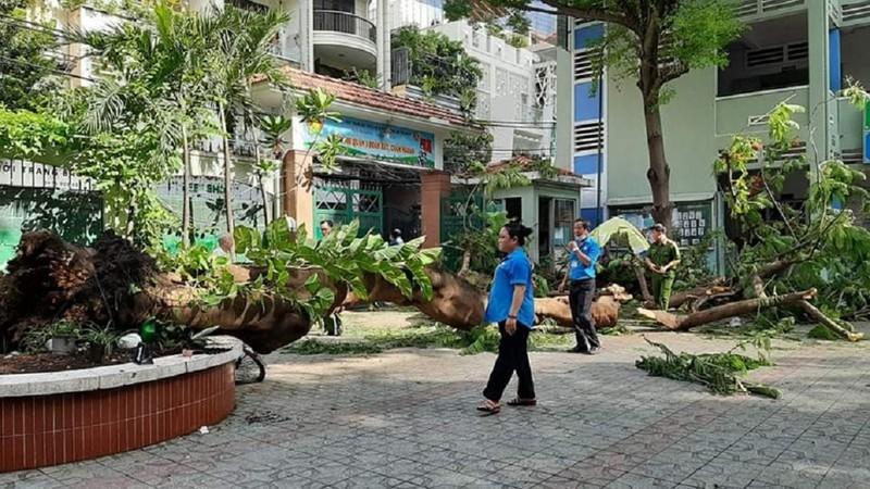 TP.HCM: Họp báo vụ cây đổ trong trường, đè nhiều học sinh - ảnh 3