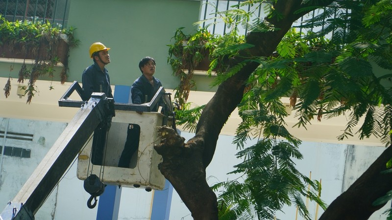 Sau sự cố cây đổ, trường Bạch Đằng xử lý cây phượng còn lại - ảnh 5