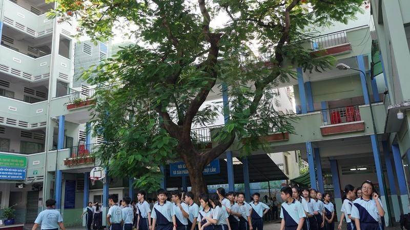 Sau sự cố cây đổ, trường Bạch Đằng xử lý cây phượng còn lại - ảnh 1