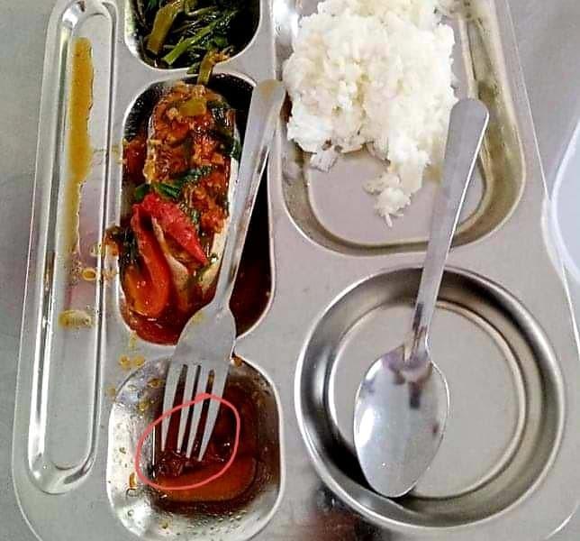 Gián xuất hiện trong bữa ăn: Sở GD&ĐT chỉ đạo giải quyết - ảnh 1