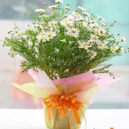 1 khách hàng chi 60 triệu mua hoa 'độc lạ' dịp 8-3 - ảnh 1