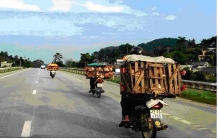Mang sọt tre 'gánh' gà con ủ rũ, chết từ Trung Quốc vào VN - ảnh 1
