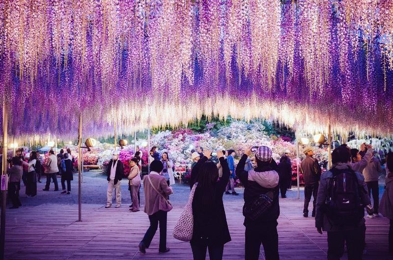 Nhật hủy tư cách đại diện xin visa của bảy công ty du lịch VN - ảnh 1