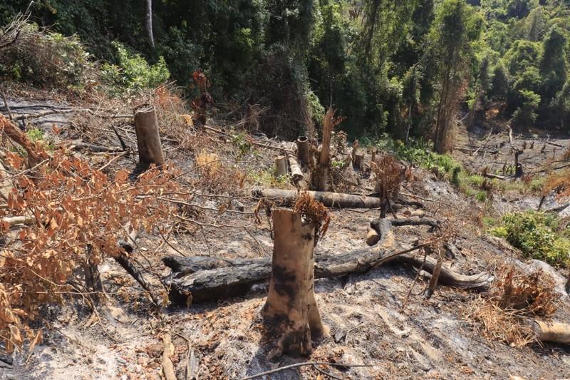 Triệu tập 2 người liên quan vụ phá rừng phòng hộ ở Đà Lạt - ảnh 4