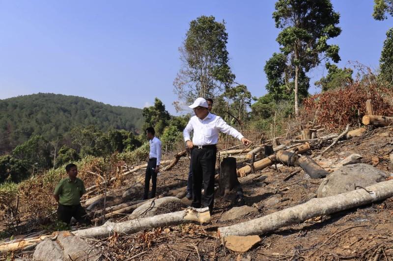 Triệu tập 2 người liên quan vụ phá rừng phòng hộ ở Đà Lạt - ảnh 1