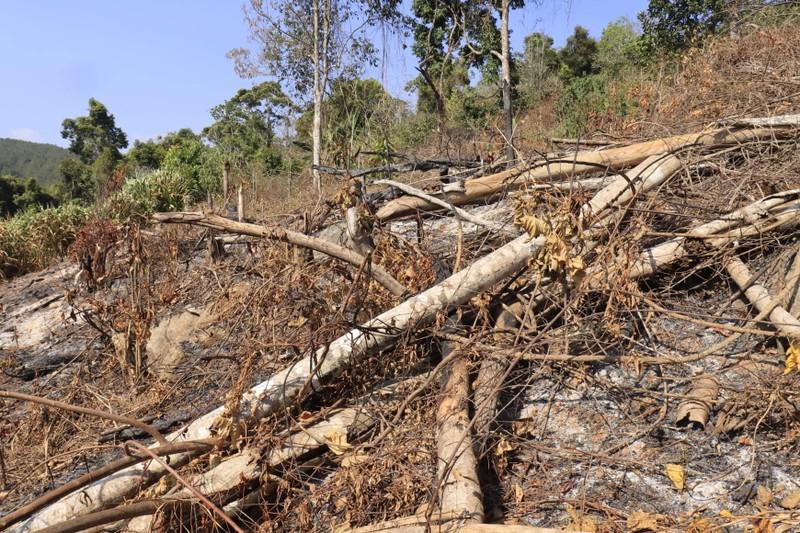 Triệu tập 2 người liên quan vụ phá rừng phòng hộ ở Đà Lạt - ảnh 2