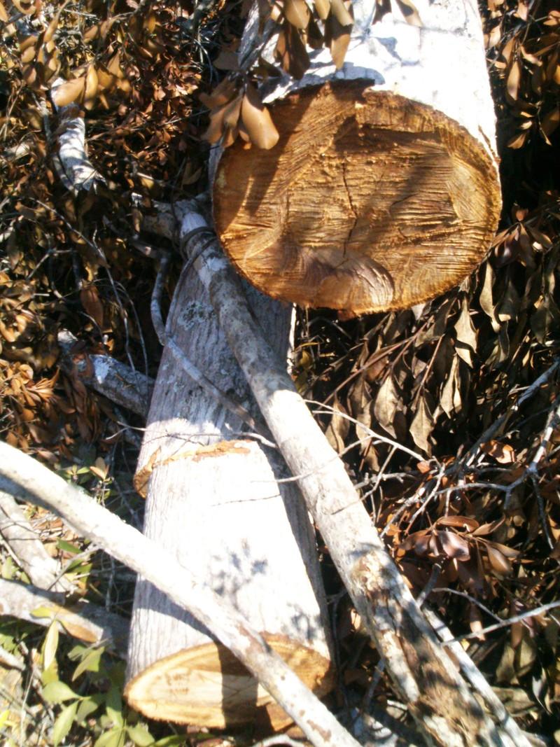 Xem xét khởi tố vụ án phá 110 ha rừng ở Phú Yên - ảnh 2