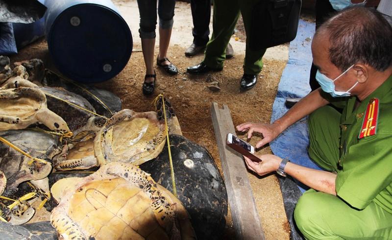 Khởi tố người tàng trữ 8.000 xác rùa biển, tai tượng - ảnh 1