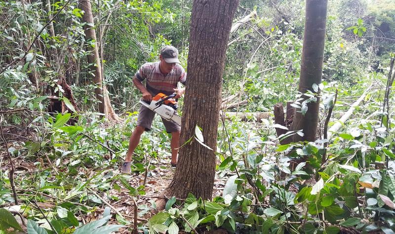 Công bố thanh tra vụ phá rừng nuôi bò ở Phú Yên - ảnh 4