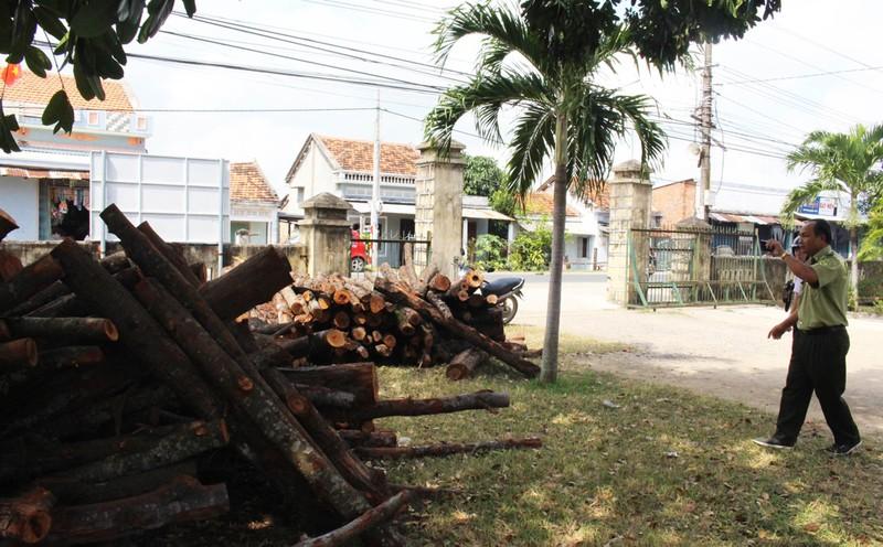 Buộc HTX phá rừng phòng hộ trồng lại rừng - ảnh 3