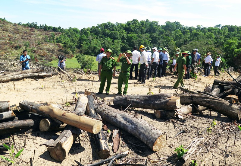 Xem lại mức kỷ luật với kiểm lâm để mất 60 ha rừng  - ảnh 1