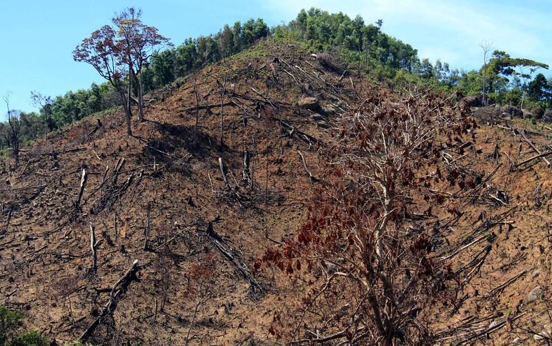 Khởi tố vụ án phá trắng 21 ha rừng phòng hộ ở Bình Định - ảnh 1