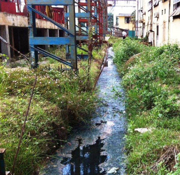 Nhà máy đường Bình Định bị dừng hoạt động do ô nhiễm - ảnh 2