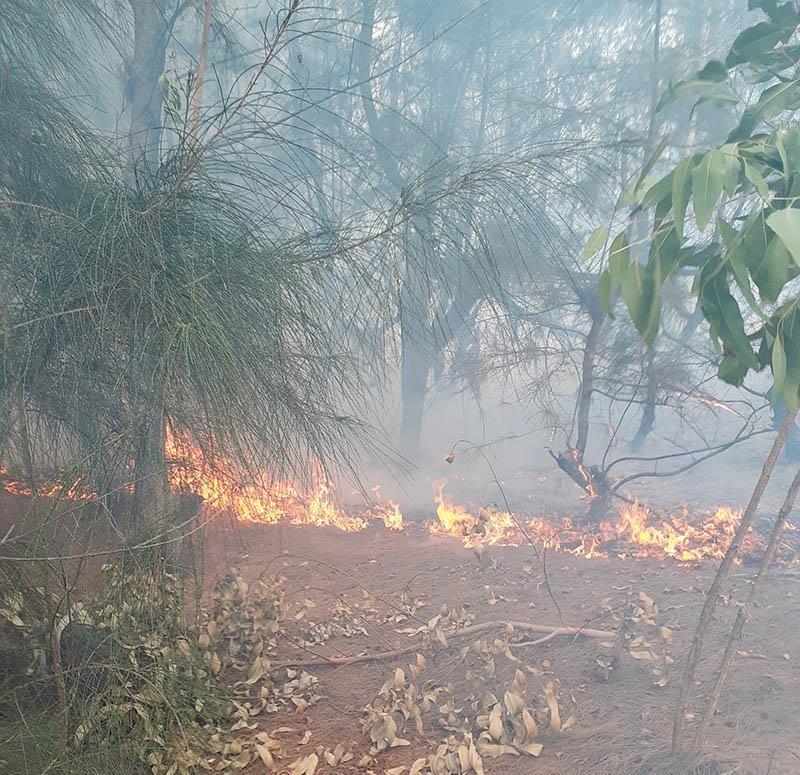 Đang cháy rừng cạnh khu dân cư ở Phú Yên - ảnh 1