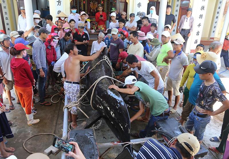 Cá voi hơn 1 tấn dạt vào bờ biển Nha Trang - ảnh 1