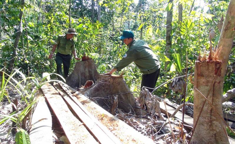 Khởi tố vụ án lâm tặc mở 1 km đường vào rừng đốn gỗ - ảnh 1