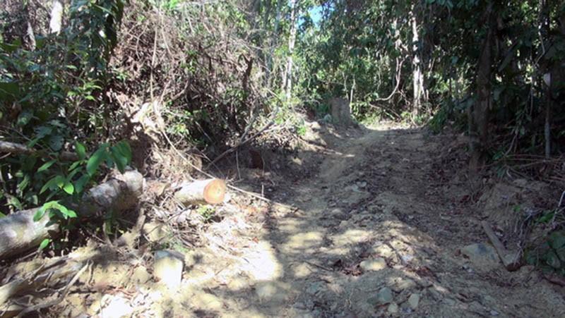 Khởi tố vụ án lâm tặc mở 1 km đường vào rừng đốn gỗ - ảnh 2