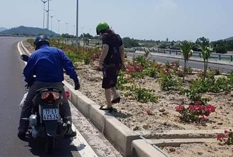 Hơn 3.000 cây hoa giấy trên quốc lộ ngàn tỉ bị lấy trộm - ảnh 1