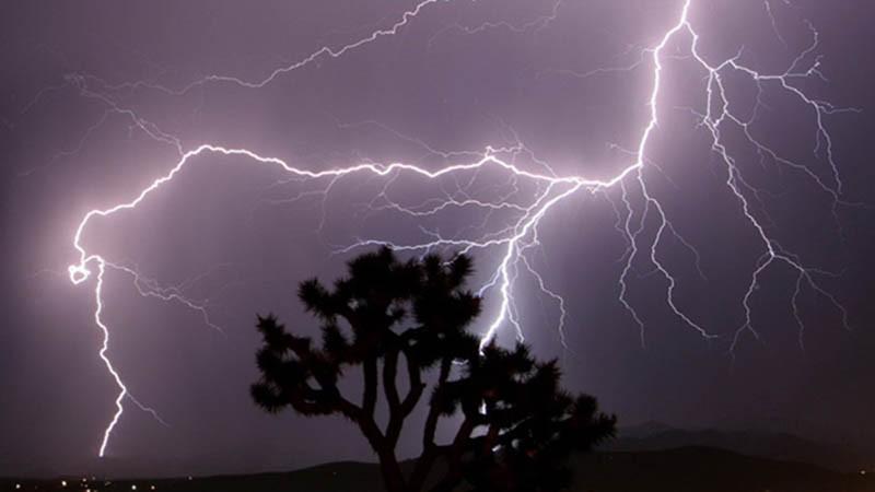 Trú mưa dưới gốc cây, 3 phụ nữ bị sét đánh tử vong - ảnh 1