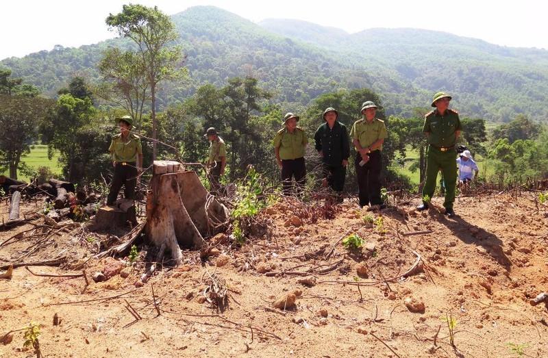 Điều tra vụ lâm tặc tấn công kiểm lâm ở Bình Định - ảnh 1