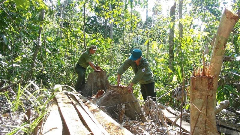 Bắt giữ 3 người mở đường vào rừng đốn gỗ - ảnh 2