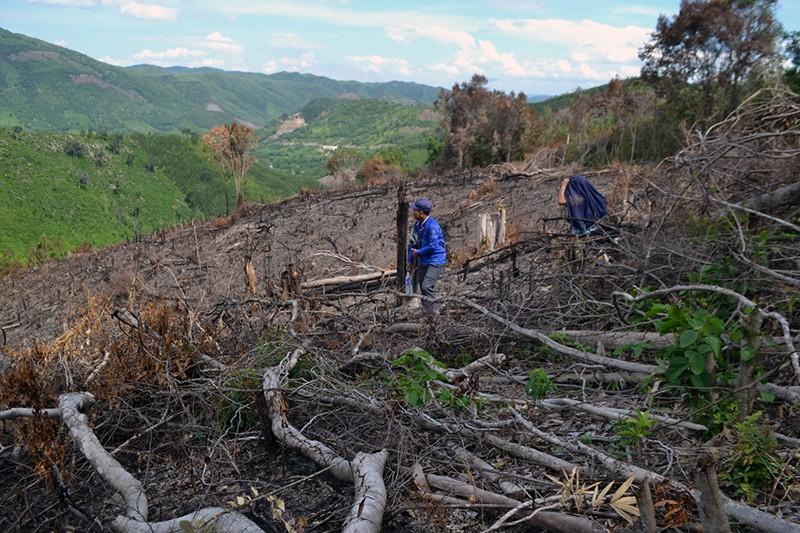 Thủ tướng yêu cầu kiểm tra thông tin việc phá rừng ở Phú Yên - ảnh 1