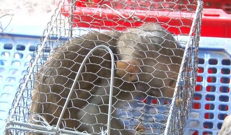 Chủ trại nuôi động vật hoang dã tử vong trong tư thế treo cổ - ảnh 2