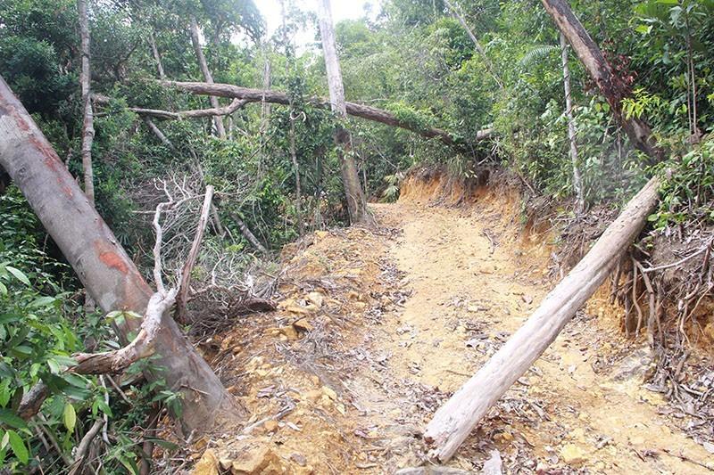 Khởi tố 5 cán bộ vụ mở đường phá rừng  - ảnh 1