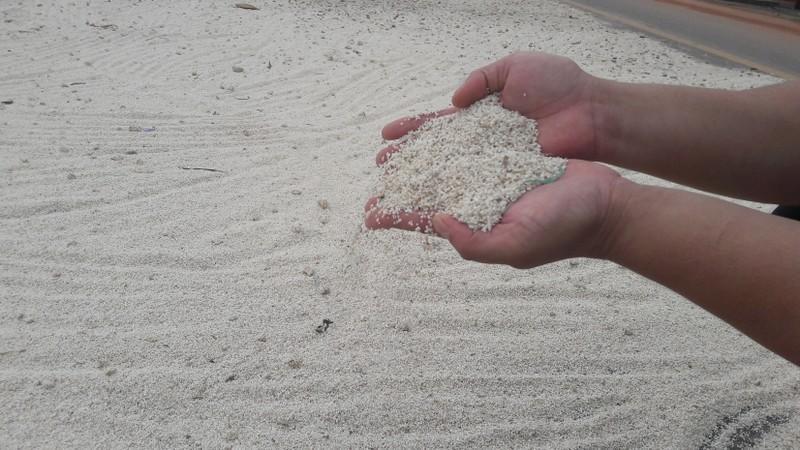 """""""Lúa bị nước lũ ngâm, nảy mầm hư hết rồi con ơi!"""" - ảnh 7"""