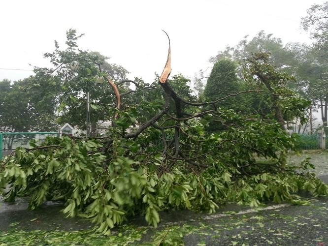 Khẩn cấp di dời 10 nghìn hộ dân tránh bão số 2 - ảnh 5