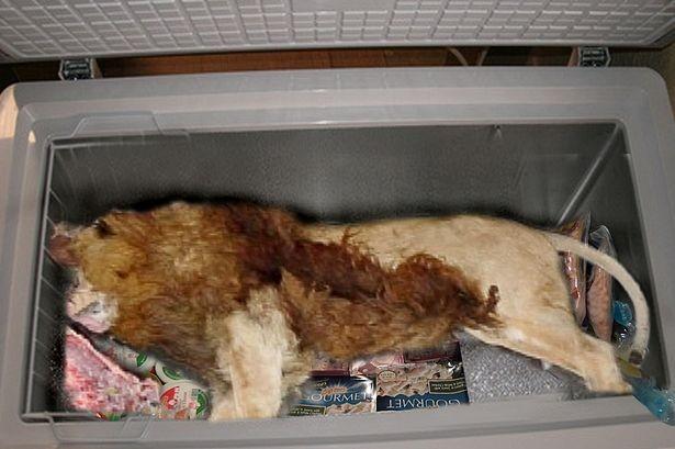 Phát hiện xác sư tử trong tủ lạnh nhà hàng - ảnh 1