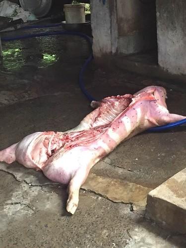 Bắt quả tang cơ sở giết mổ heo bệnh ở Đồng Nai - ảnh 1