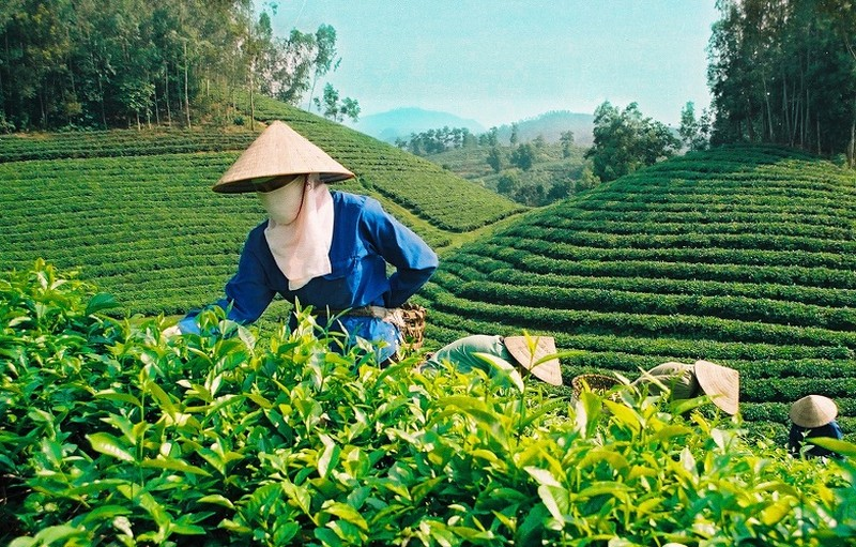 Chè, cà phê, trái cây khó cạnh tranh thị trường quốc tế - ảnh 1