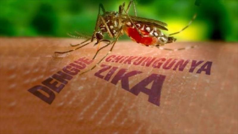 Kiểm dịch y tế tại cửa khẩu phòng virus Zika xâm nhập - ảnh 1